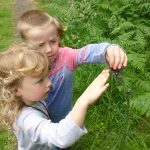 Children identifying leaves