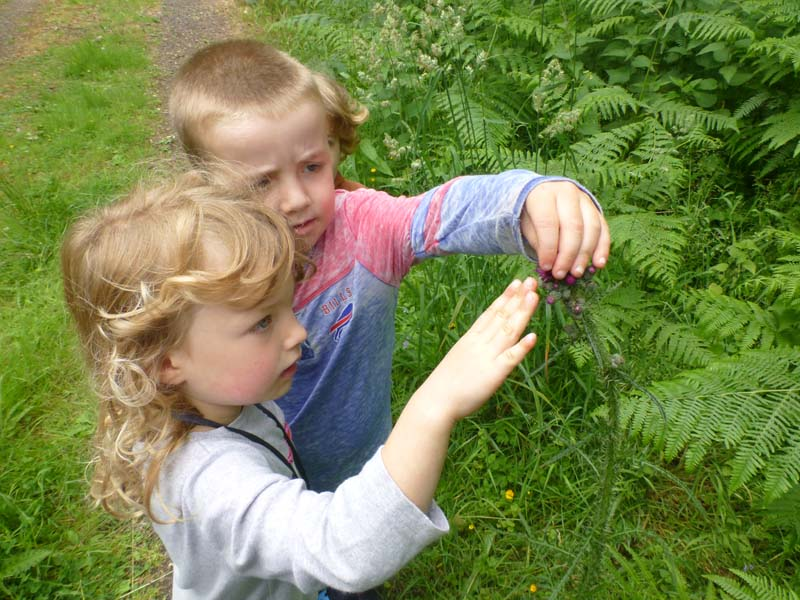 Children identifying leaves